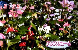 mezamashi_02.jpg