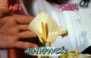 mezamashi_06.jpg