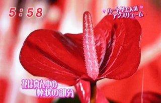 mezamashi_08.jpg