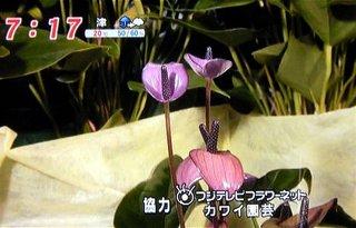 mezamashi_14.jpg