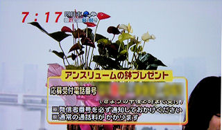 mezamashi_26.jpg