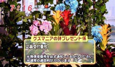 guz_19.jpg