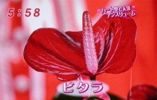 mezamashi_07.jpg