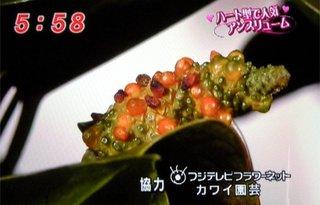mezamashi_09.jpg