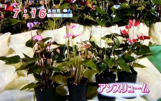 mezamashi_12.jpg