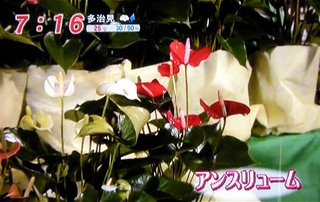 mezamashi_13.jpg